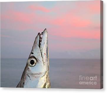 Ribbonfish At Sunrise Canvas Print by Patricia Januszkiewicz