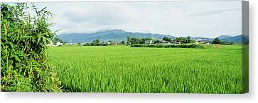 Rice Field At Sunrise, Kyushu, Japan Canvas Print by Panoramic Images