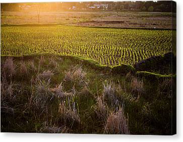 Rice Field In Madagascar Canvas Print by Diana Mrazikova/ Vwpics