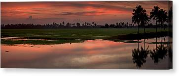 Rice Fields Of India Canvas Print