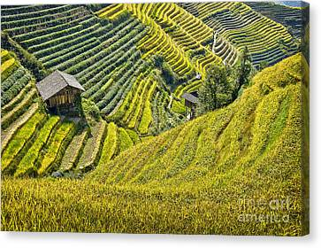 Chinese Landscape Canvas Print - Rice Fields Terraces by Delphimages Photo Creations