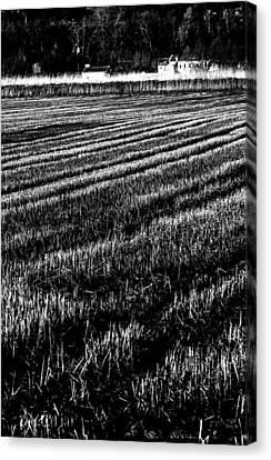 Rice Paddies Canvas Print by Edgar Laureano