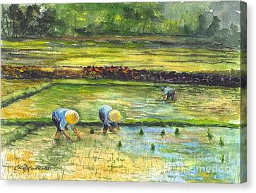 The Rice Paddy Field Canvas Print