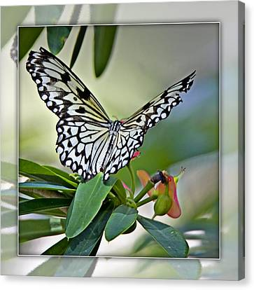 Rice Paper Butterfly 2b Canvas Print