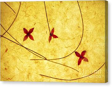 Rice Paper Wildflower Yellow Canvas Print by Charline Xia