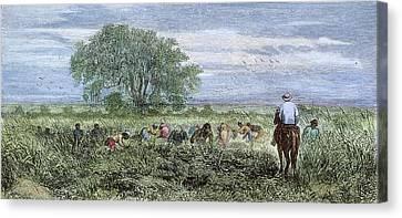 Rice Plantation, 1876 Canvas Print by Granger