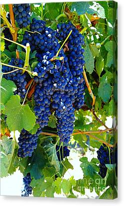 Rich On The Vine   Canvas Print by Jeff Swan
