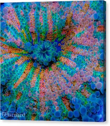 Ricordea Galaxy Canvas Print by Guinapora Graphics