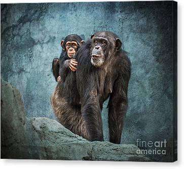 Chimpanzee Canvas Print - Ride Along by Jamie Pham