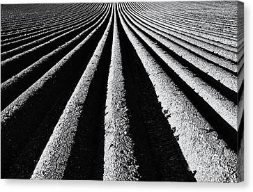 Arable Canvas Print - Ridge And Furrow by Tim Gainey