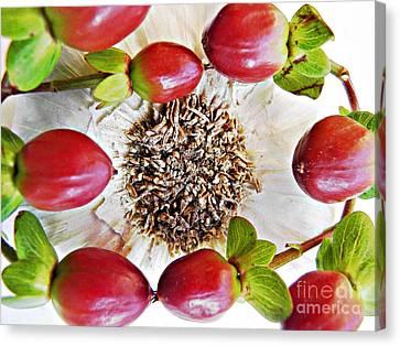 Ring Around The Garlic Canvas Print by Sarah Loft