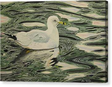 Ring Bill Seagull Canvas Print