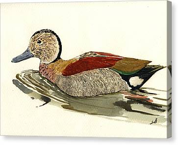 Ringed Teal Canvas Print by Juan  Bosco