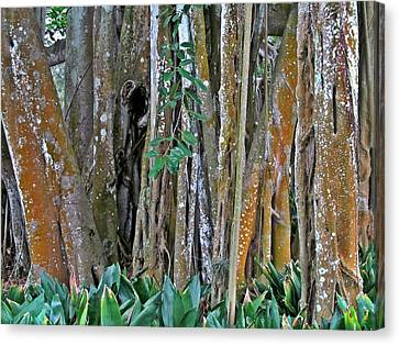 Ringling Trees 1 Canvas Print by Maria Huntley