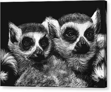 Ringtail Lemurs Canvas Print by Heather Ward