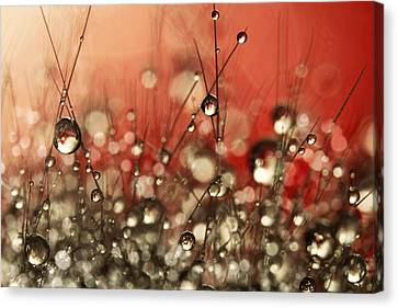 Canvas Print featuring the photograph Riot Red Cactus Sparkles by Sharon Johnstone