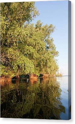Flooding Canvas Print - Riparian Forest In The Danube Delta by Martin Zwick