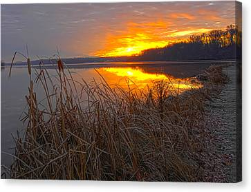 Canvas Print featuring the photograph Rising Sunlights Up Shore Line Of Cattails by Randall Branham