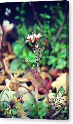 Canvas Print featuring the photograph Rising Wildflower by Candice Trimble