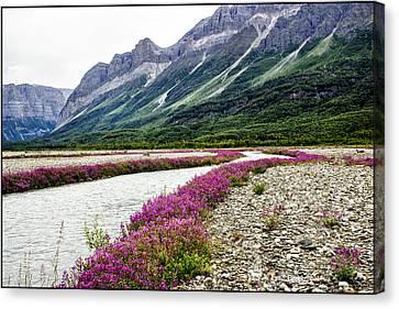 River Beauties Canvas Print