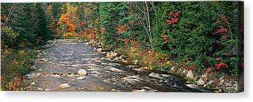 River Flowing Through A Forest, Ellis Canvas Print by Panoramic Images