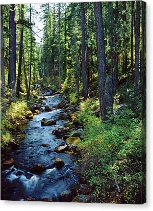 River Flowing Through A Forest, South Canvas Print