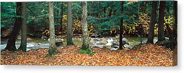 River Flowing Through A Forest, White Canvas Print by Panoramic Images
