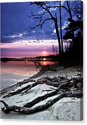 Canvas Print featuring the photograph River Forest Sunset Exposed Twisted Tree Roots Beach Art Prints by Eszra