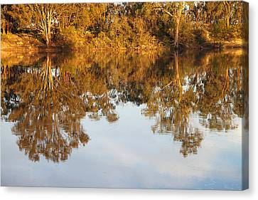 River Murray Reflections Early Evening Canvas Print by Carole-Anne Fooks