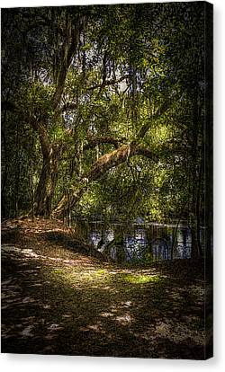 River Oak Canvas Print