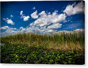 River Of Grass Canvas Print