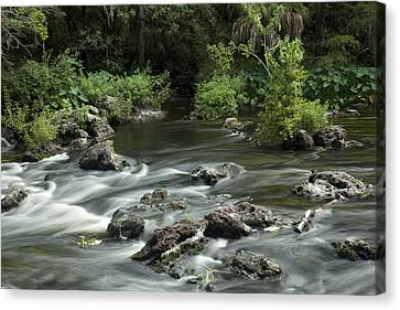 River Rapids Canvas Print by Robert Anderson