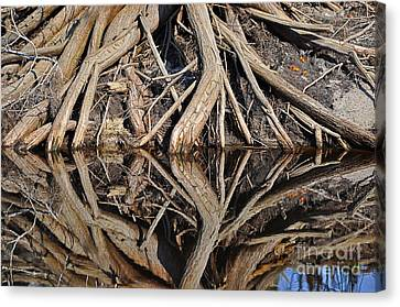 River Roots Canvas Print by Al Powell Photography USA