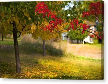 Riverbend Orchard Canvas Print by Theresa Tahara