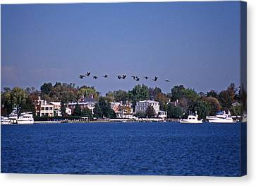 Riverfront Geese Canvas Print by Skip Willits