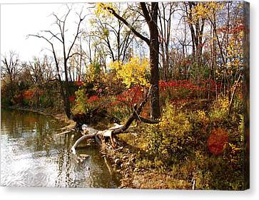 Riverfront In Fall Canvas Print by Jocelyne Choquette