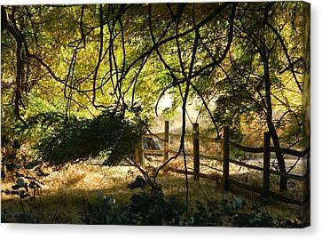 Riverwalk Locust Grove Canvas Print