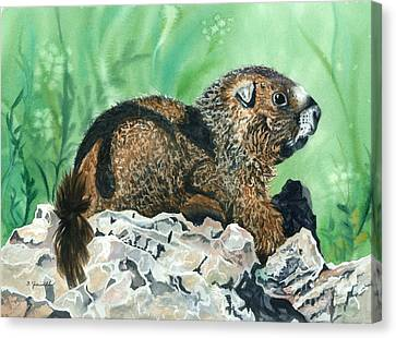 Rmbl Marmot Canvas Print by Barbara Jewell