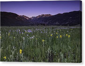 Rmnp Moraine Park Flora Sunrise Canvas Print by Tom Wilbert