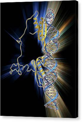 Rna Editing Enzyme Canvas Print by Laguna Design