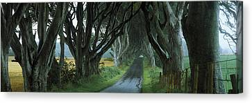 Road At The Dark Hedges, Armoy, County Canvas Print by Panoramic Images