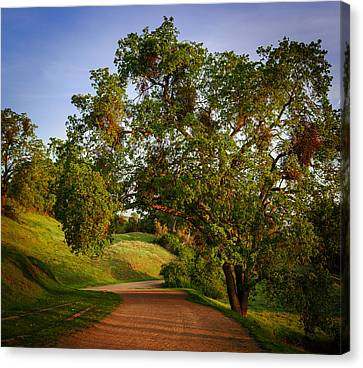 Dirt Canvas Print - Road By The Tree by Sarit Sotangkur