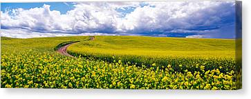 Road, Canola Field, Washington State Canvas Print by Panoramic Images