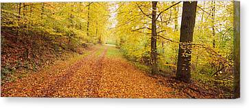 Road Covered With Autumnal Leaves Canvas Print by Panoramic Images