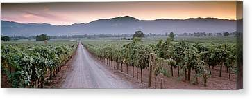Road In A Vineyard, Napa Valley Canvas Print