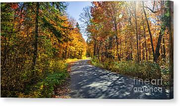 Road In Fall Forest Canvas Print