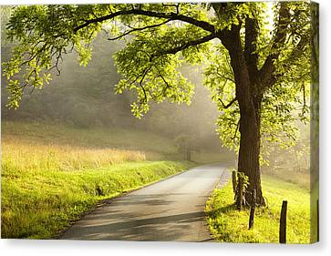 Road In The Woods Canvas Print by Andrew Soundarajan