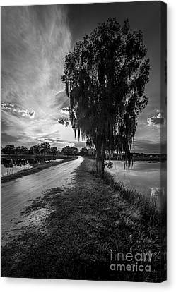 Road Into The Light-bw Canvas Print by Marvin Spates