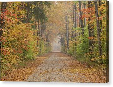 Road Passing Though Forest In Autumn Canvas Print by Panoramic Images