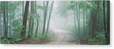 Road Passing Through A Forest, Skyline Canvas Print